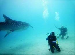 WWhale Shark Diving