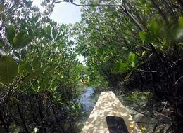 Kayakking in Jungle